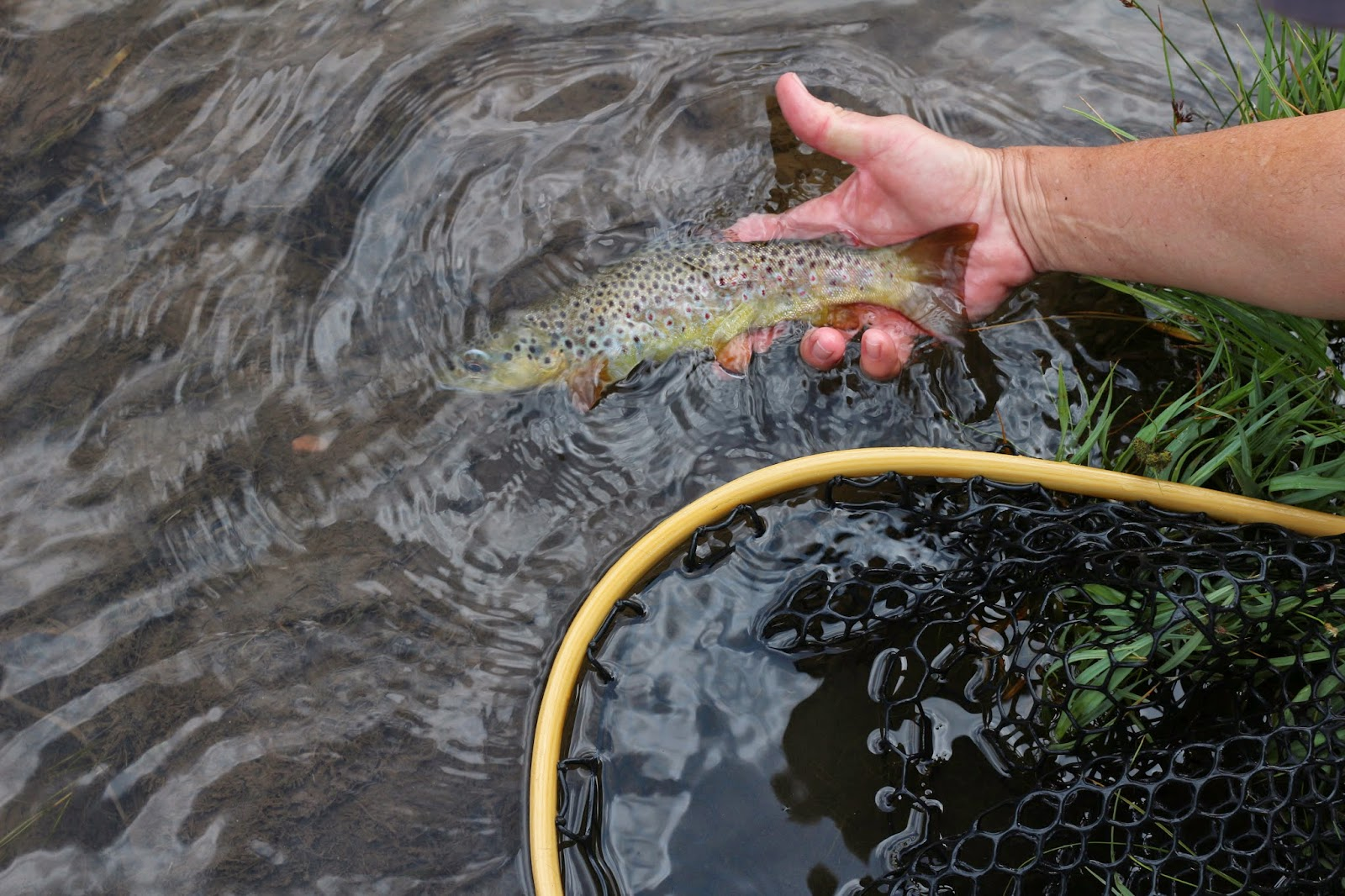 Fly+fish+the+Roaring+Fork+River+in+Colorado+with+Jay+Scott+Outdoors+16.JPG
