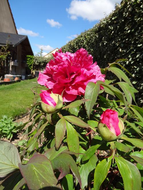 Patscrap petit tour au jardin - Petit jardin culinary arts tours ...
