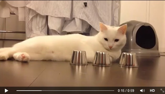 http://funkidos.com/videos-collection/amazing-videos/cats-are-smarter-than-you