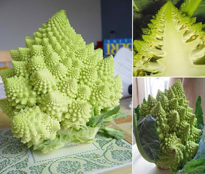 Sacred Geometry in Romanesco broccoli