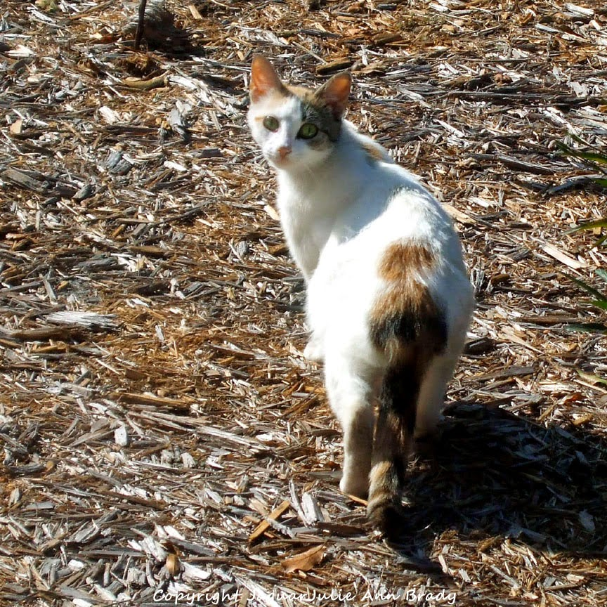 Pregnant White Mommy Cat in Mandarin Florida