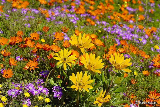 Namaqualand flower Tours - TripAdvisor