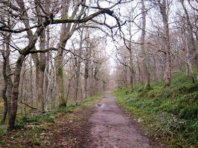 Deeside walks: trek along the path near Ballater
