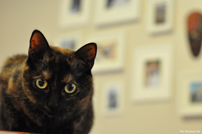 Peanut Butter the cat sitting in front of the gallery wall