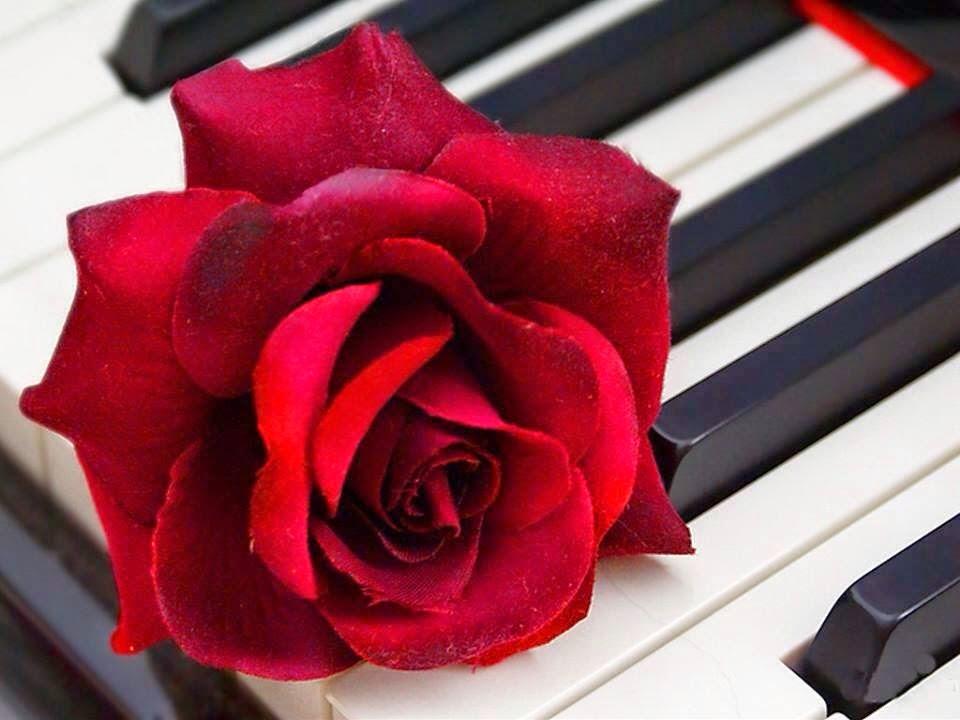 *** YO... sin más*** - Página 2 Rosa+con+piano