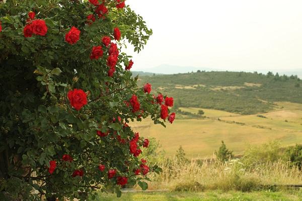 rosales y vistas a la llanura