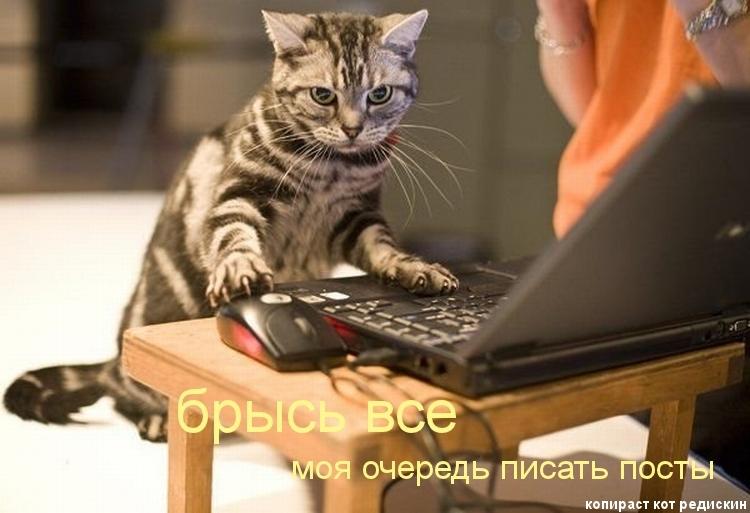 Кот на картинке: Брысь все, моя очередь писать посты - котоматрица