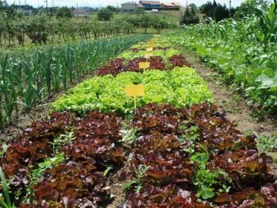 Agricultura organica for Rotacion cultivos agricultura ecologica