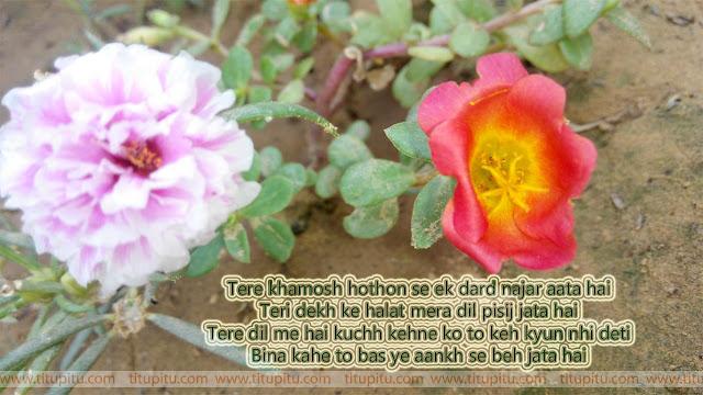 teri-khamoshi-hindi-shayari