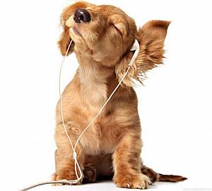 Imagenes Graciosas de Animales, perros