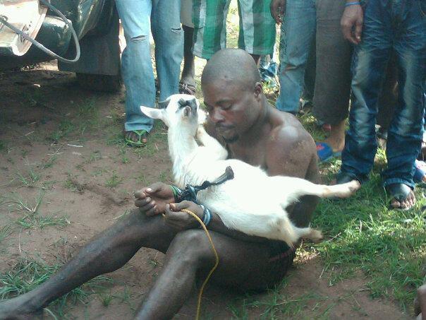 360 naija s blog photos  goat thief beaten and stripped naked in