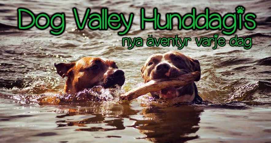 Dog Valley Hunddagis