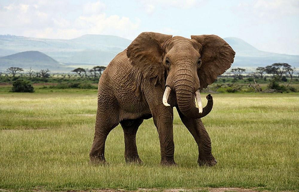 Elephants Eletopia