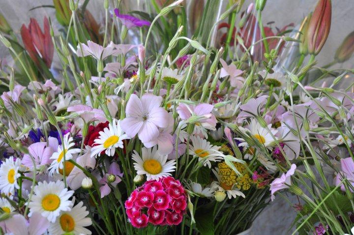 blue dragonfly cut flower farm flower gallery, Beautiful flower