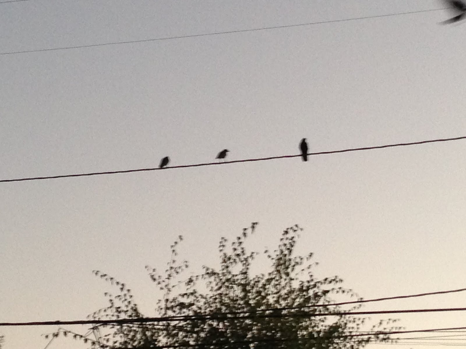 The birds on the wire