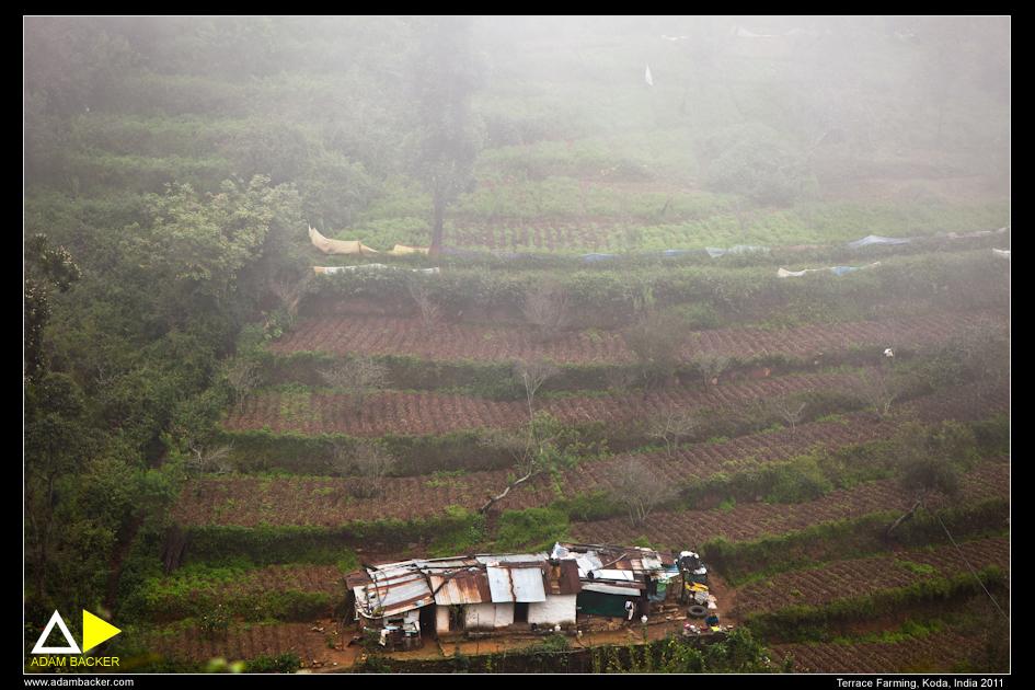 Terrace farming adam backer for Terrace farming in india