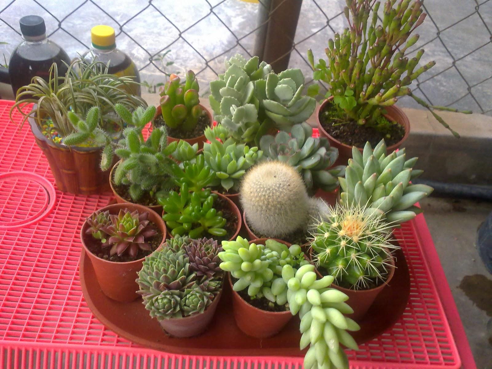 Types Of Cactus