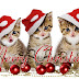 Merry Christmas Messages 2015 - Sweet Xmas Text  Wishes Words Card Messages For Teachers Parents WhatsApp Facebook 2015