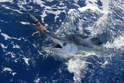Bahamas Sport fishing