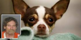 Perkosa Anjing Seorang pria dihukum 10 Tahun