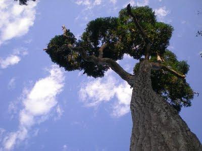 Plantas en Peligro de Extinción (Argentina/Sudamerica)