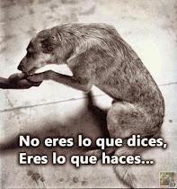 Ayudemos a los animales