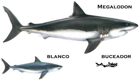 Anatomia del Pez.: EL TIBURON.