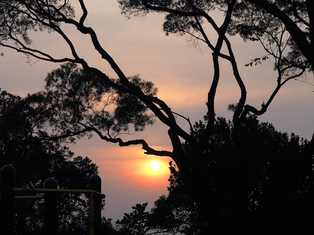 Tree silhouette at sunset on the Peak Circle Walk | Hong Kong