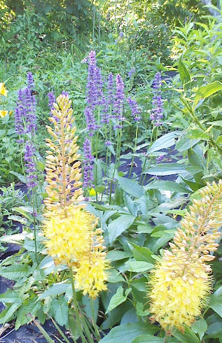 Perennial Garden Fantastic Favorites