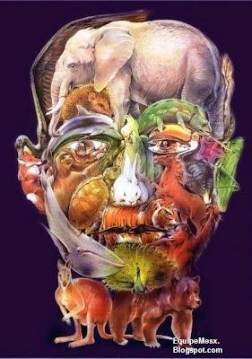 Imagem de vários animais que forma um rosto de um humano