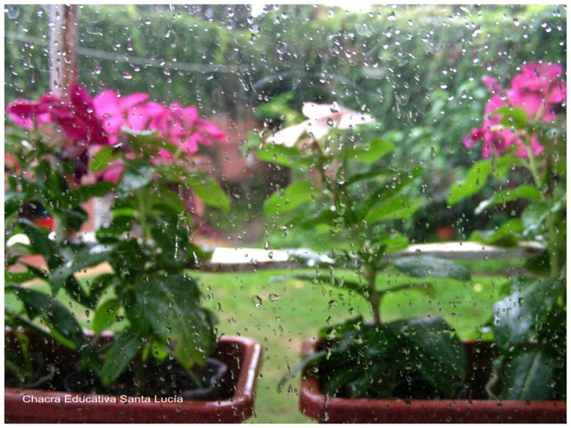 Gotas de lluvia en la ventana - Chacra Educativa Santa Lucía