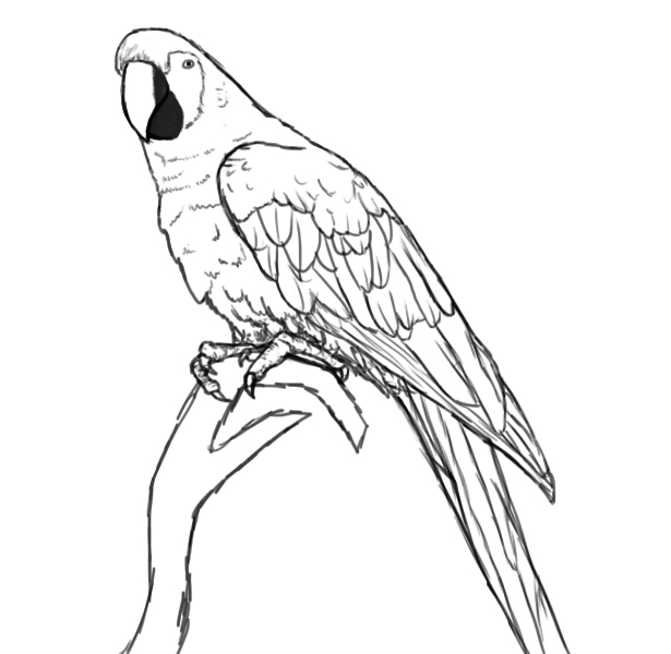 Parrot drawing outline - photo#2