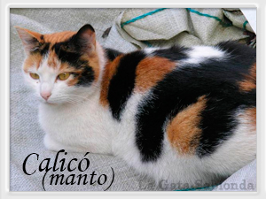 gato hembra macho distinguir