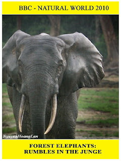 Những Chú Voi Rừng - Forest Elephants
