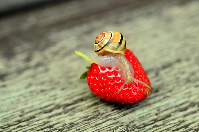 slimak przyroda truskaweczka