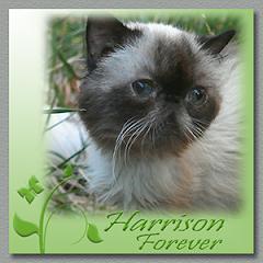 Harrison  RIP