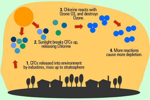 an introduction to the potential effects of a depleted ozone layer The potential effects of a depleted ozone layer currently, growth is inhibited and plant yields are declining in regions where ozone depletion is most pronounced, sunburn of leaves, death of.