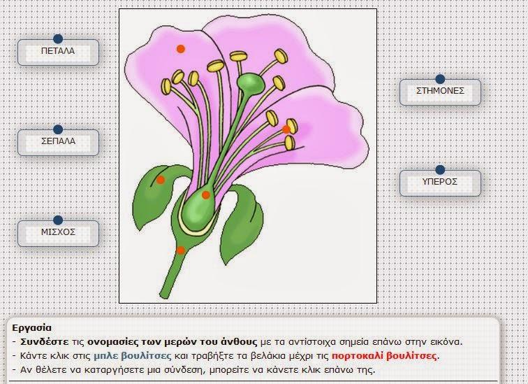 http://ebooks.edu.gr/modules/ebook/show.php/DSDIM-D108/558/3664,15901/extras/mtpd_c04_flower_parts2/index.html