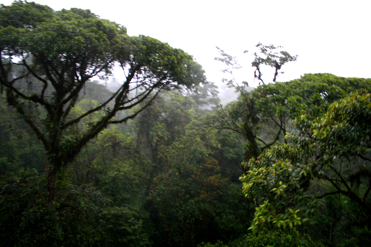 More rainforest canopy and a broccoli tree to the left. & BOHEMIAN adventures: Aerial tram through the rainforest