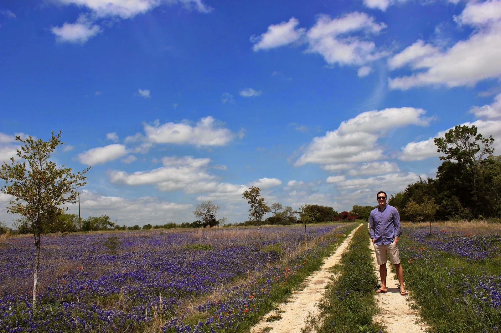 Texas Bluebonnet Season