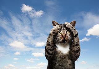 Gambar Wallpaper Kucing Lucu Banget 200016
