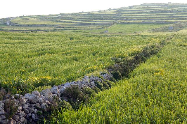 terraced hills rubble walls gozo