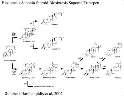 Biosintesis saponin