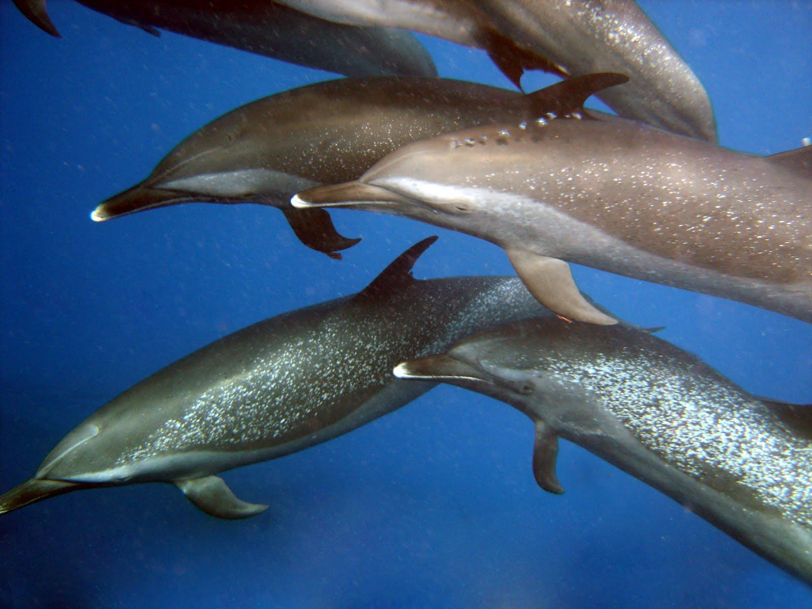 killer whale calf