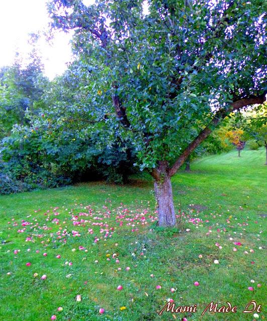 Beautiful Fall - Wunderschöner Herbst