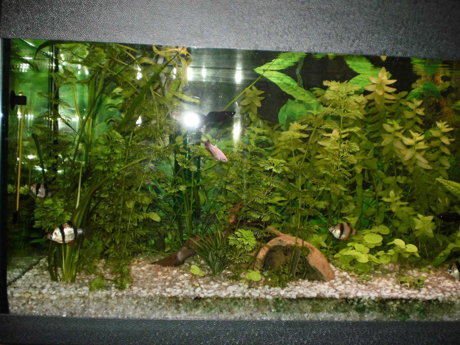 La vetrina arcobaleno acquario attrezzatura necessaria for Oggetti per acquario