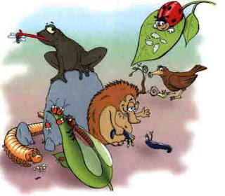 Asociaci n vegetariana vida sana de canarias la Rotaciones de cultivos ecologicos