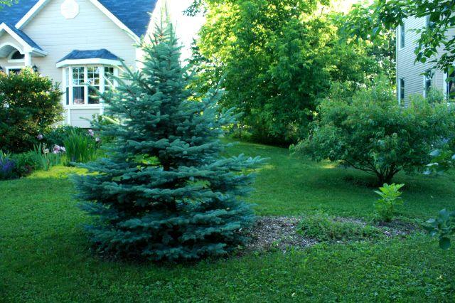 Mes passions en juin au jardin for Juin au jardin