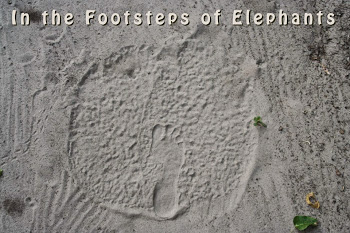 Footprint perspective