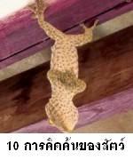 10 อันดับการคิดค้นของสัตว์